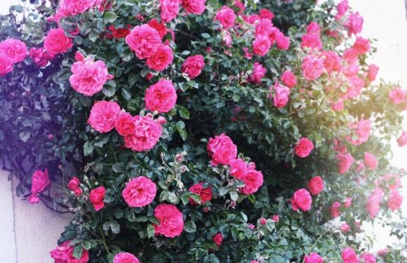flowersh7w